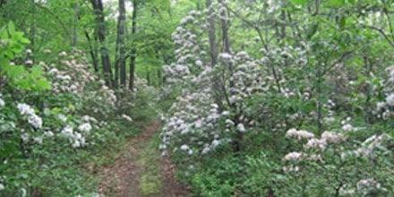 Eidolon Walking Trail