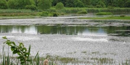 Stauffer's Marsh Nature Preserve
