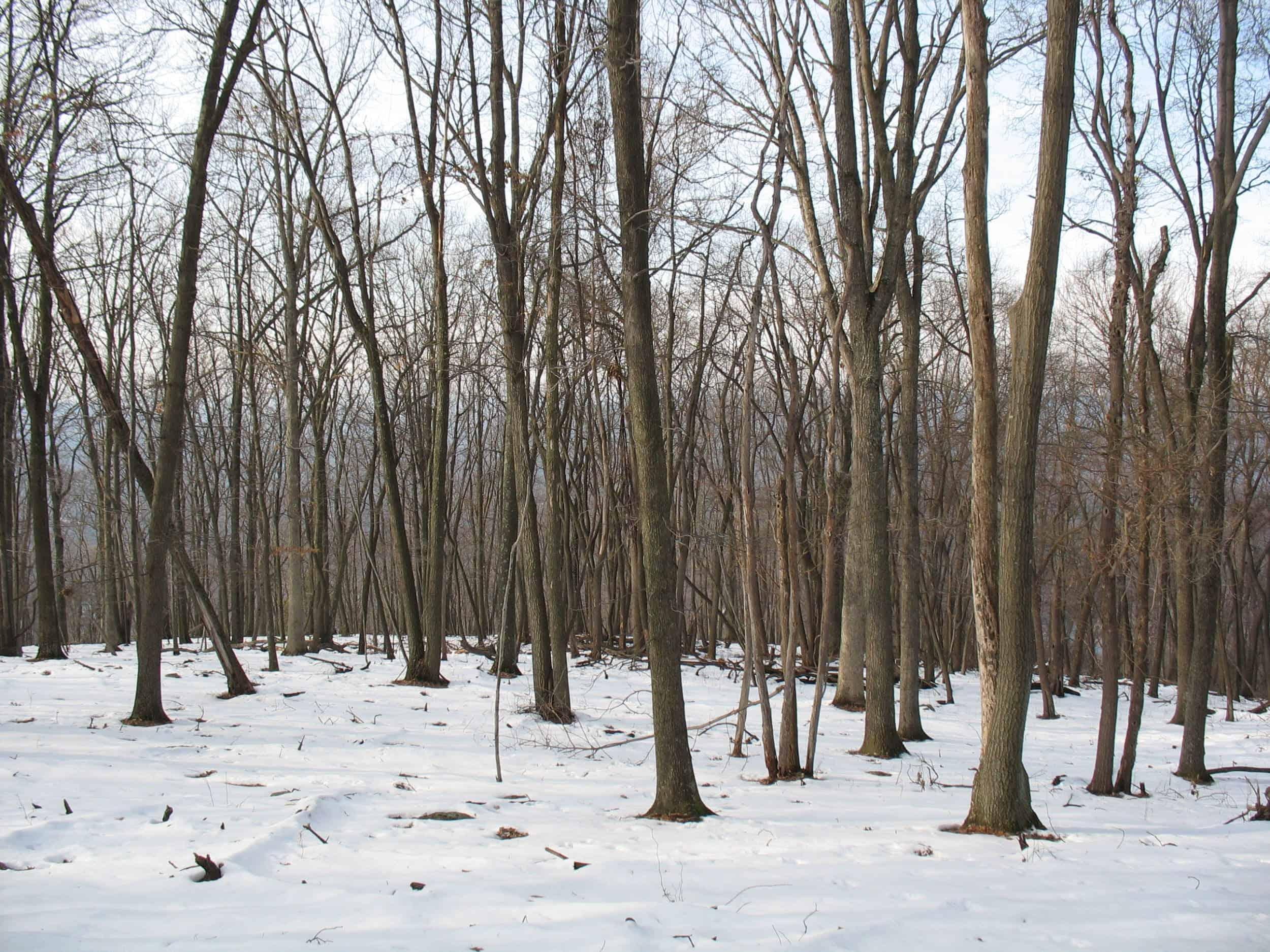 Eidolon Nature Preserve in the snow
