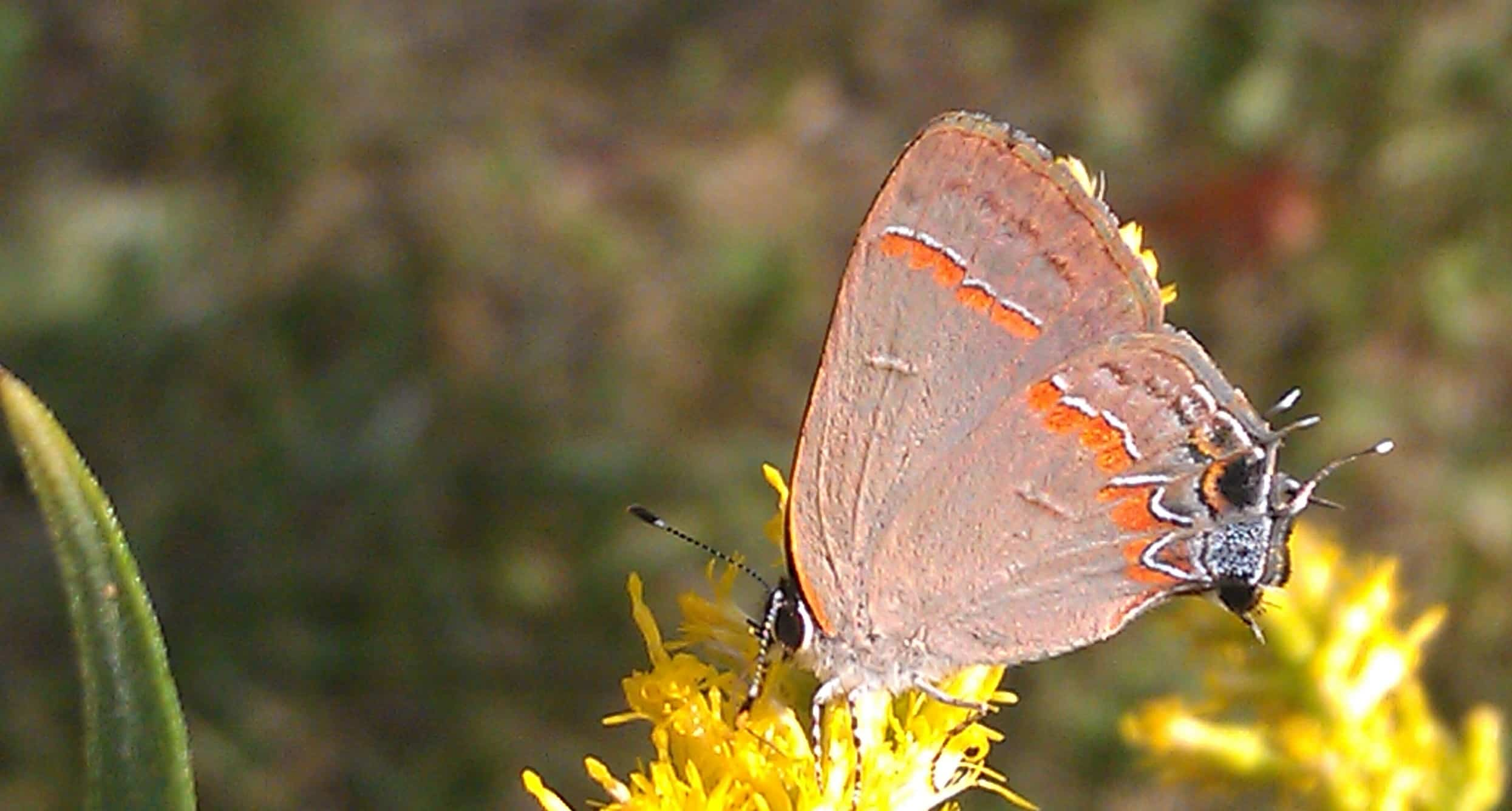 Gardening for Butterflies and Butterfly ID Field Trip - Potomac ...