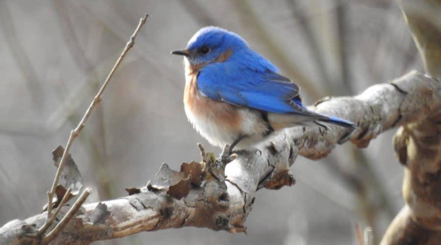 Bird Walk at Virginius Island