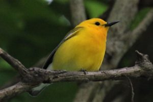 Blair Benson & Beth Poole's Birding Adventure