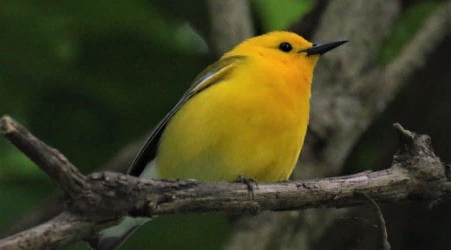 Blair Benson & Beth Poole's Birding Adventure