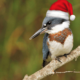 Christmas Bird Count – Charles Town, WV – Rescheduled to Tuesday, Dec 15