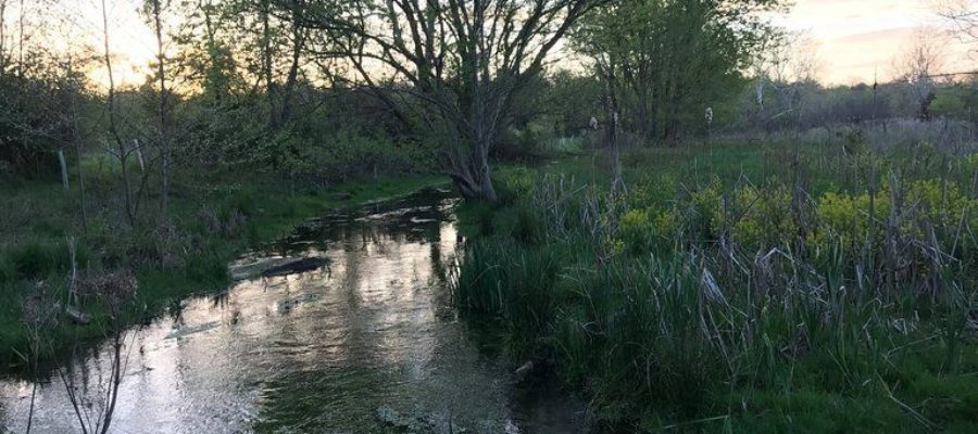 Linda Case – a Safe Water Conservation Collaborative Landowner Legacy Story